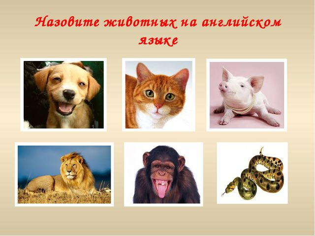 Назовите животных на английском языке
