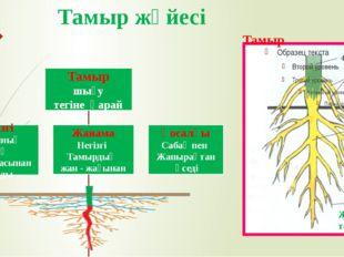 Тамыр жүйесі Сабақ Жанама тамыр Негізгі тамыр Қосалқы тамыр