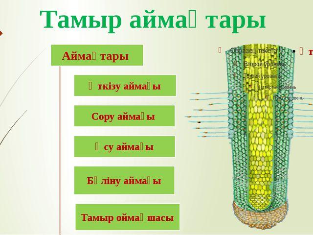 Тамыр аймақтары