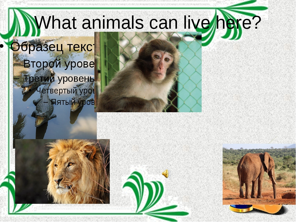 What animals can live here?