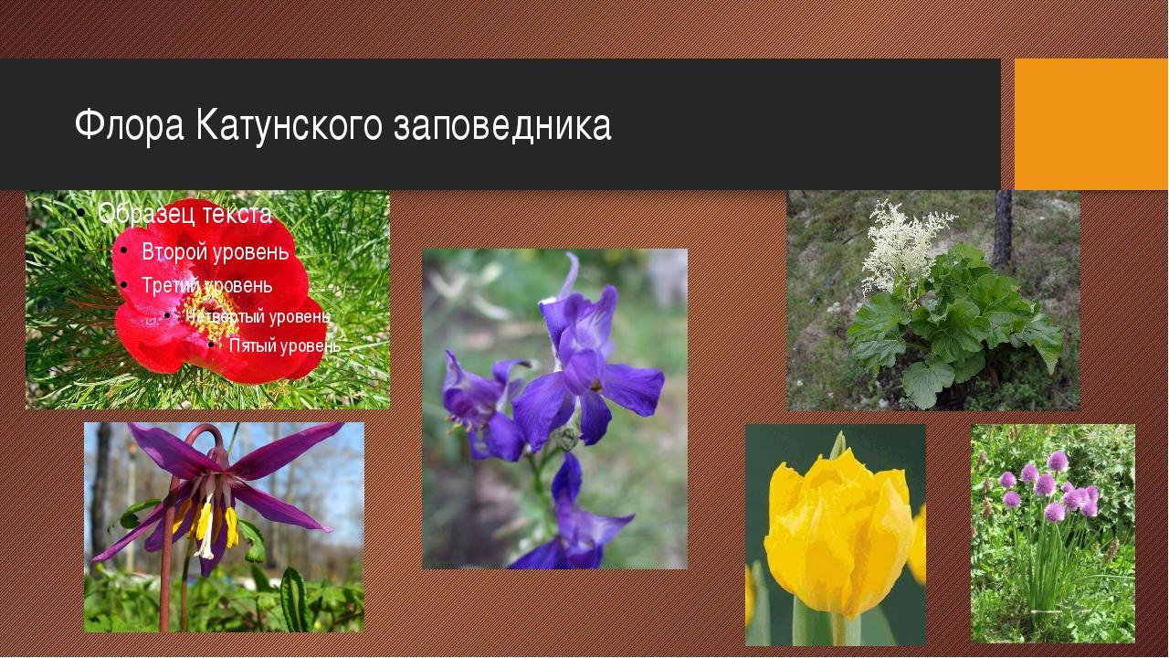 Флора Катунского заповедника