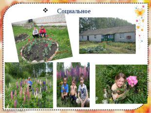 Социальное FokinaLida.75@mail.ru