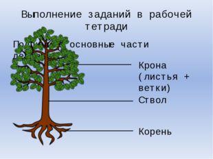 Подпишите основные части деревьев. Выполнение заданий в рабочей тетради Крона