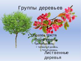 Группы деревьев Лиственные деревья