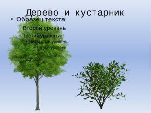 Дерево и кустарник