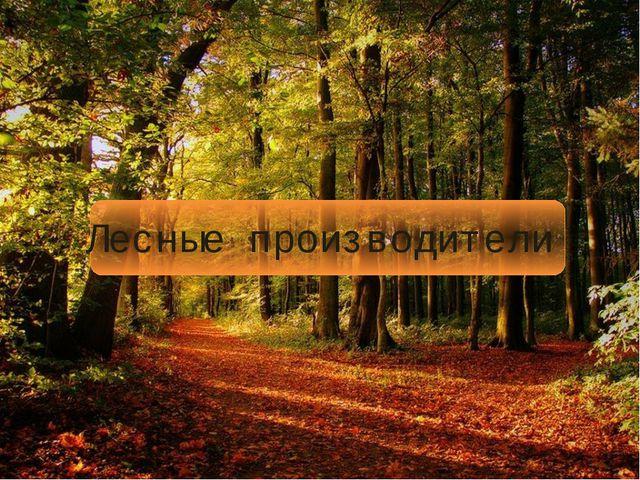 Лесные производители