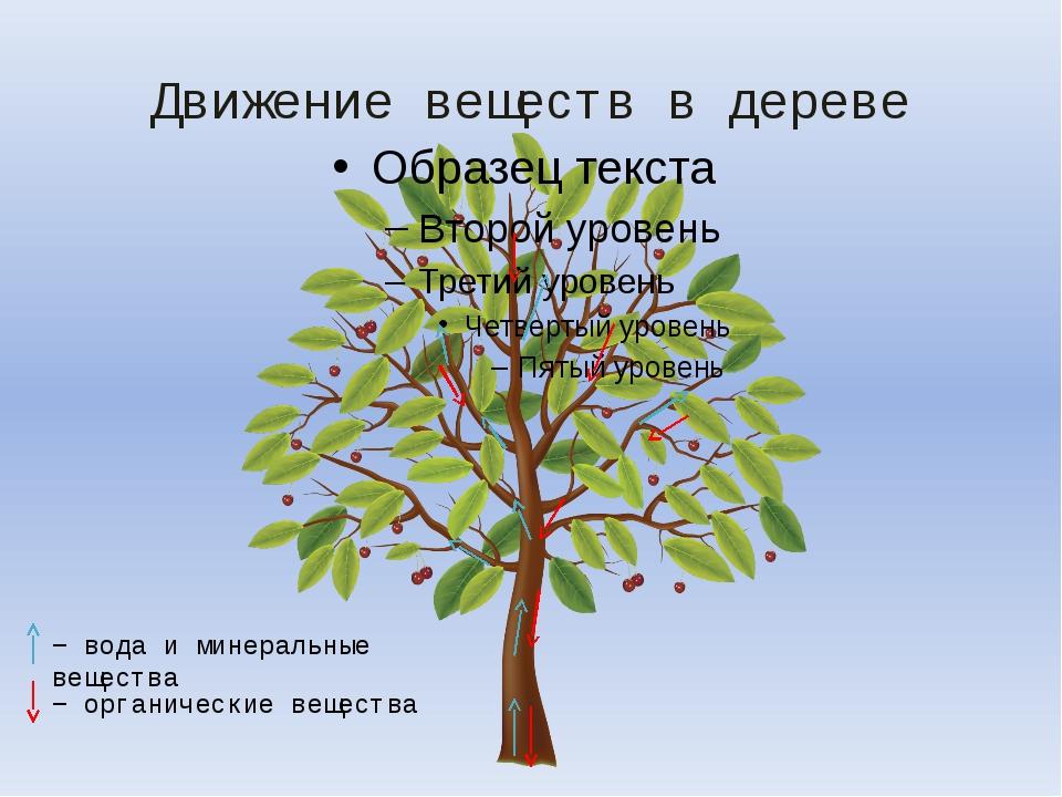 Движение веществ в дереве − вода и минеральные вещества − органические вещества