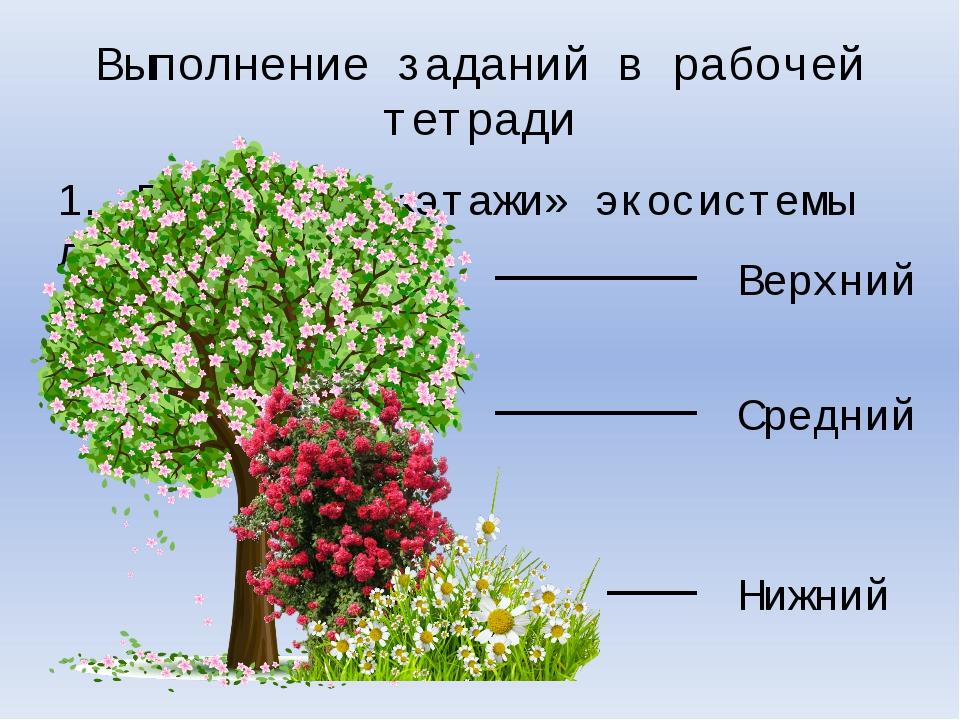 Выполнение заданий в рабочей тетради 1. Подпишите «этажи» экосистемы леса. Ве...