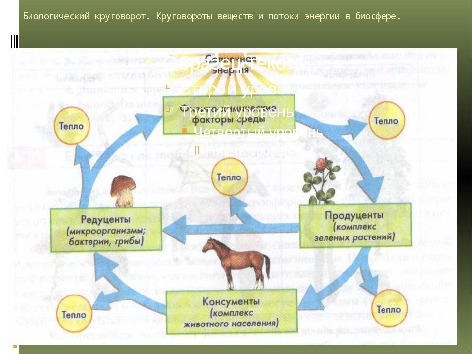 Биологический круговорот. Круговороты веществ и потоки энергии в биосфере.