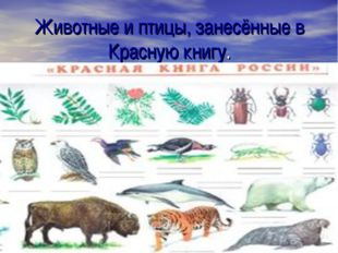 Животные и птицы, занесённые в Красную книгу.