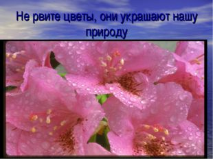 Не рвите цветы, они украшают нашу природу ;