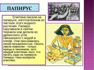 Египтяне писали на папирусе, изготовленном из листьев этого водного растения