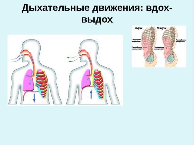 Дыхательные движения: вдох-выдох