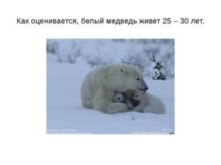 Как оценивается, белый медведь живет 25 – 30 лет.