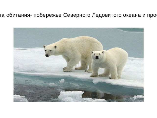 Излюбленные места обитания- побережье Северного Ледовитого океана и пространс...
