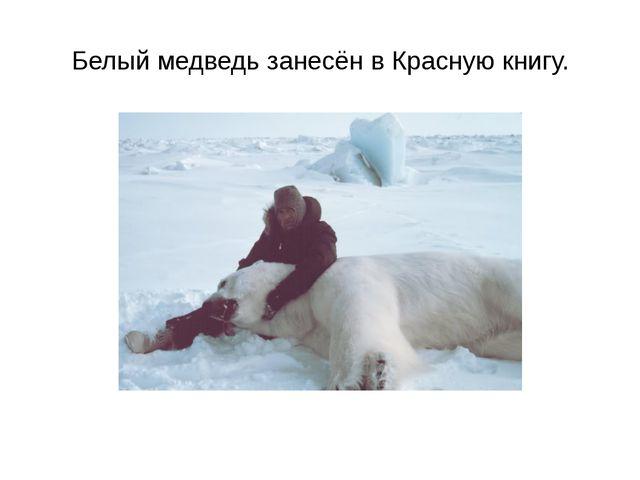 Белый медведь занесён в Красную книгу.