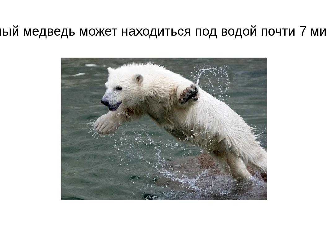 Белый медведь может находиться под водой почти 7 минут.