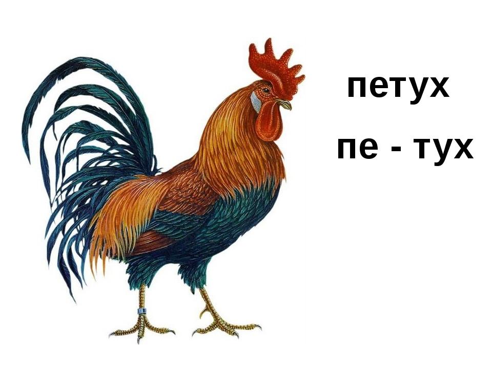 петух пе - тух