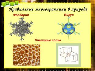 Правильные многогранники в природе Феодария Вирус Пчелиные соты