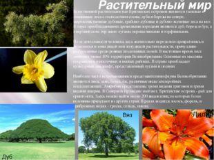 Растительный мир Естественной растительностью Британских островов являются та