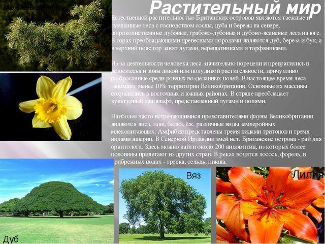 Растительный мир Естественной растительностью Британских островов являются та...