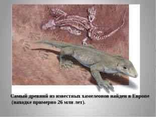 Самый древний из известных хамелеонов найден в Европе (находке примерно 26м