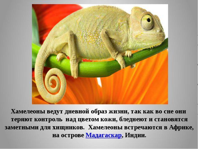 Хамелеоны ведут дневной образ жизни, так как во сне они теряют контроль над...