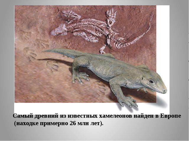 Самый древний из известных хамелеонов найден в Европе (находке примерно 26м...