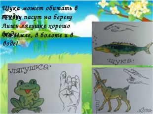 Щука может обитать в пруду, А козу пасут на берегу Лишь лягушке хорошо везде: