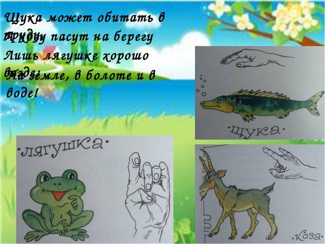 Щука может обитать в пруду, А козу пасут на берегу Лишь лягушке хорошо везде:...