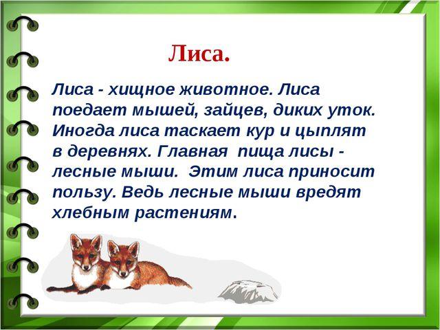 Лиса. Лиса - хищное животное. Лиса поедает мышей, зайцев, диких уток. Иногда...