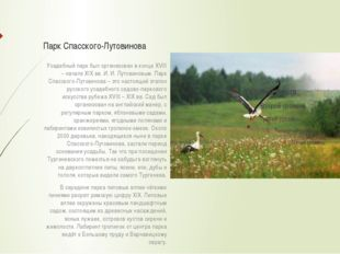 Парк Спасского-Лутовинова Усадебный парк был организован в конце XVIII – нача