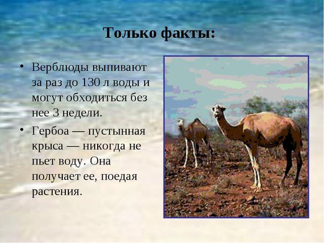 Только факты: Верблюды выпивают за раз до 130 л воды и могут обходиться без н...