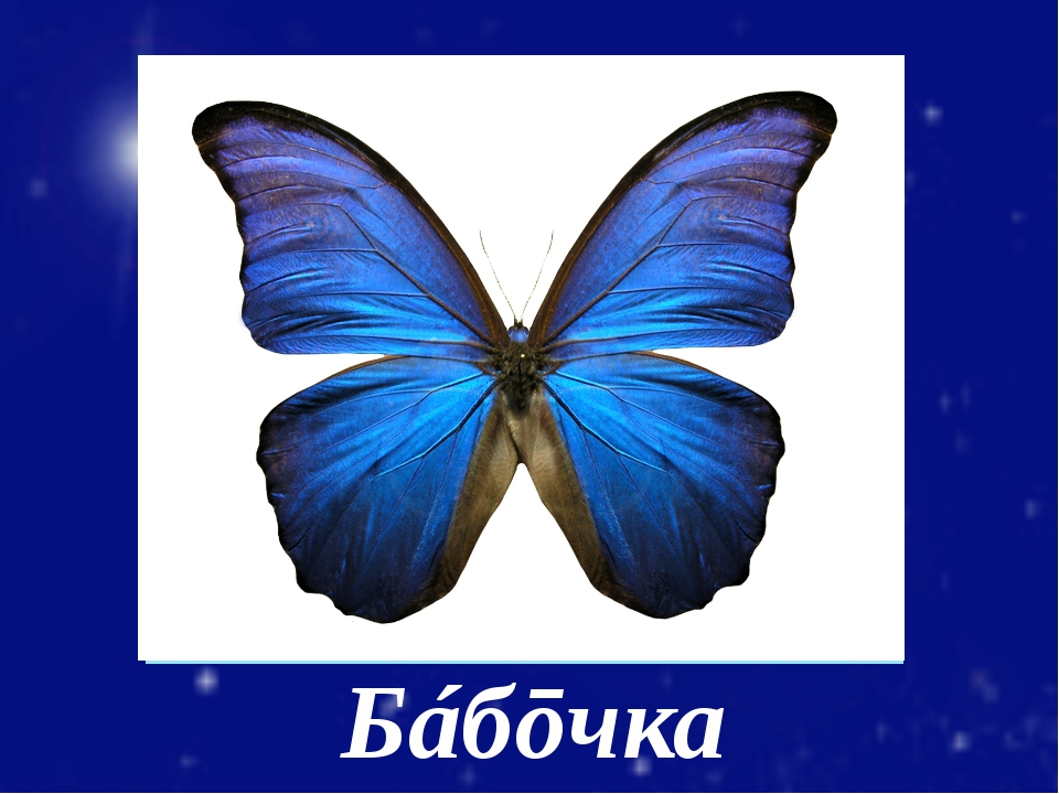 Бáбōчка