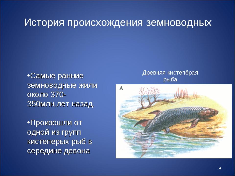 * История происхождения земноводных Самые ранние земноводные жили около 370-3...