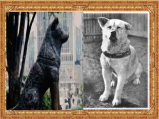 Акита-ину Хатико. Пёс стал местной достопримечательностью, а через некоторое