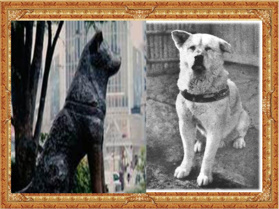 Акита-ину Хатико. Пёс стал местной достопримечательностью, а через некоторое...