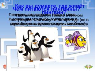 Как вы думаете, где живёт пингвин? Пингвины водятся только в Южном полушарии.
