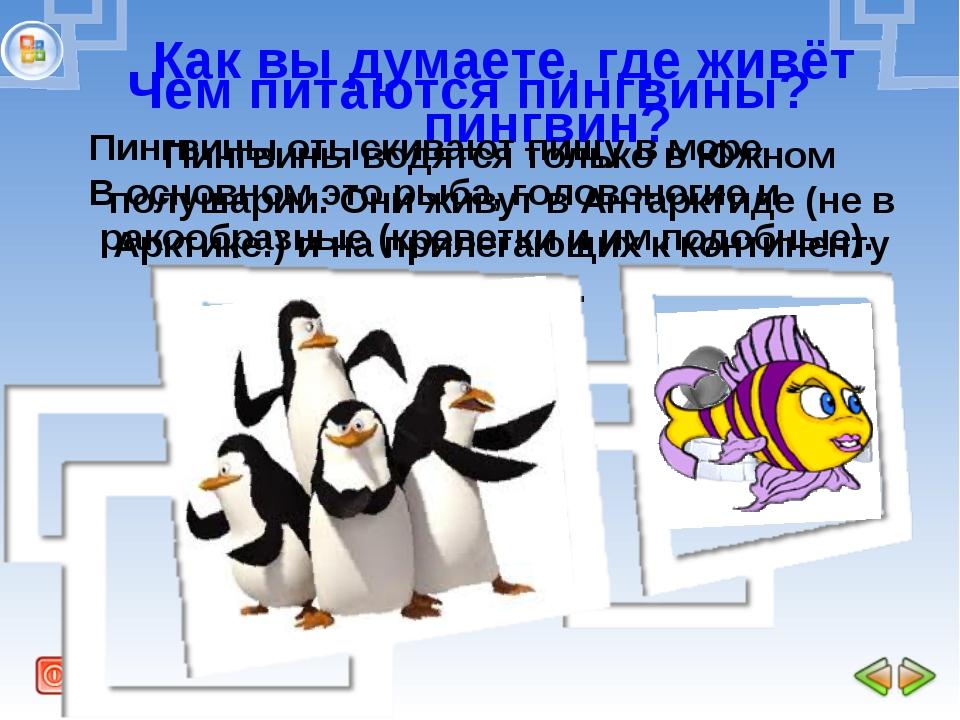 Как вы думаете, где живёт пингвин? Пингвины водятся только в Южном полушарии....