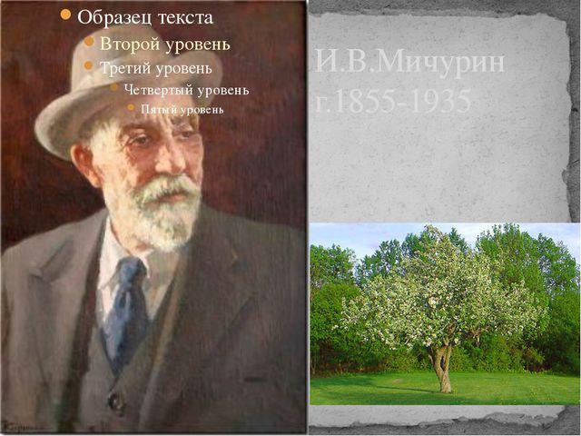 И.В.Мичурин г.1855-1935