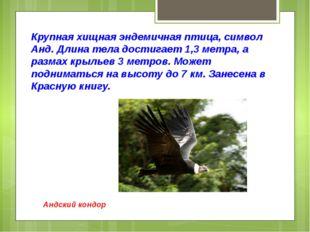 Крупная хищная эндемичная птица, символ Анд. Длина тела достигает 1,3 метра,