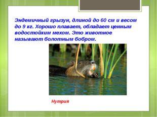 Эндемичный грызун, длиной до 60 см и весом до 9 кг. Хорошо плавает, обладает