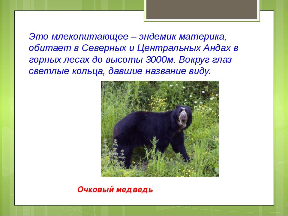 Это млекопитающее – эндемик материка, обитает в Северных и Центральных Андах...