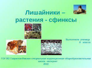 Лишайники – растения - сфинксы Выполнила ученица класса ГОУ ЯО Гаврилов-Ямска