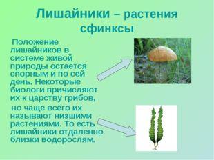 Лишайники – растения сфинксы Положение лишайников в системе живой природы ост