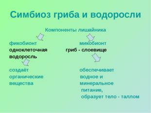 Симбиоз гриба и водоросли Компоненты лишайника фикобионт микобионт одноклеточ