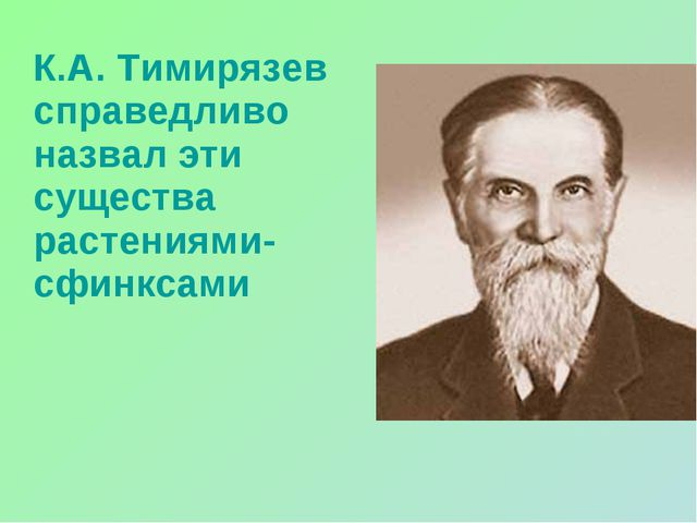 К.А. Тимирязев справедливо назвал эти существа растениями-сфинксами