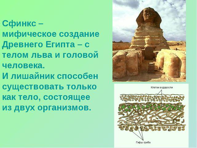 Сфинкс – мифическое создание Древнего Египта – с телом льва и головой человек...