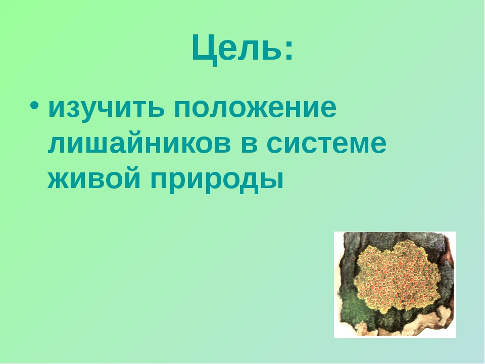 Цель: изучить положение лишайников в системе живой природы