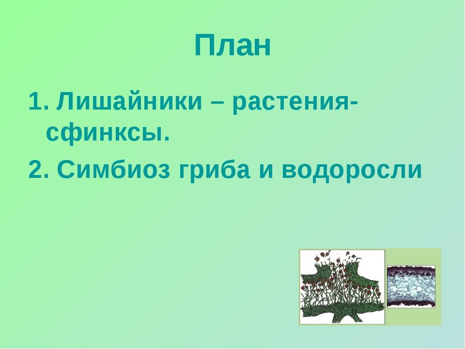 План 1. Лишайники – растения-сфинксы. 2. Симбиоз гриба и водоросли